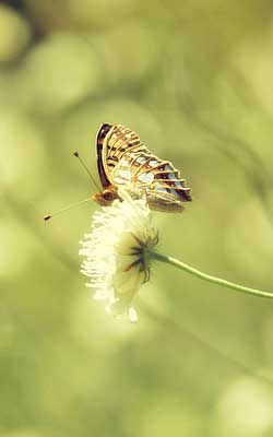 Butterfly on Flower - The Butterfly Effect