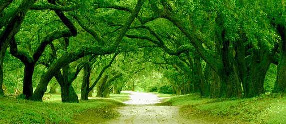 The Path to Following Your Heart - Tree Tunnel