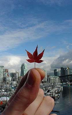Canadian Leaf Thing