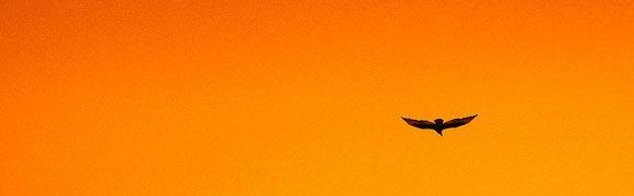 Soaring High - Freedom - by Luz Adriana Villa on Flickr